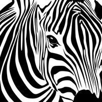 Zebra Library