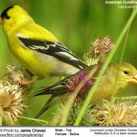 Copy of Birds of North Carolina