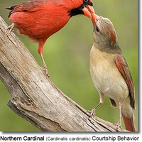 Birds of North Carolina