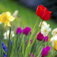 Spring STEM Question of the Week