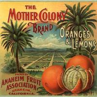 Orange County/ Anaheim History