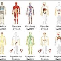 Human Biology and Health