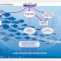 Overfishing- Grade 4 STEM Unit Ideas + Resources