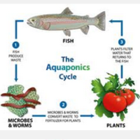 Food Chain/Web Lessons for Grade 4  Aquaponics STEM Unit