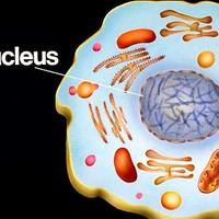 organelles miller justin