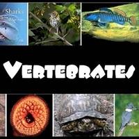 5th Grade Vertebrates Research Project