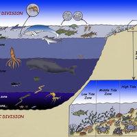 Marine Organisms & Ecosystems