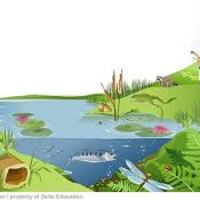 Ecosystems, Biomes, and Food Chains