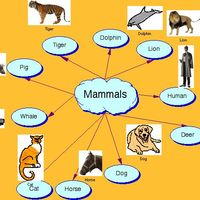 Mammal Group Example