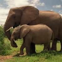 Animals Going Extinct