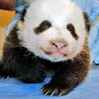 Meet Bao Bao
