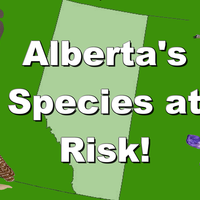 Endangered Species in Alberta