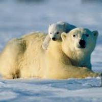 Mrs. Long's Polar Bears Binder