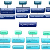WCHS BIO 1: Human Body Template