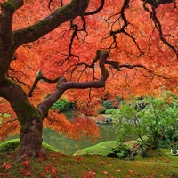 Japanese Garden Resources