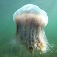 Porifera & Cnidarian Phyla