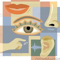 My senses (3��)