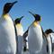 Penguin Project