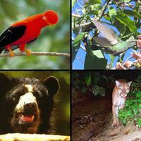Fauna de la Selva Tropical