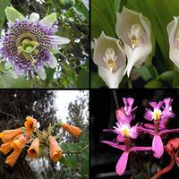 Flora de la Selva Tropical