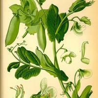 PS1.b Anatomy of Plants