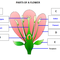 Plants & Flowers Unit Cycle 2 McCaig