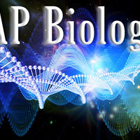 AP Biology North Bay Haven College and Career Academy