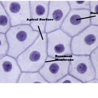 Adv. Biology