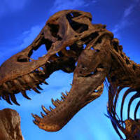 Dinosaurs, Fossils & Extinction