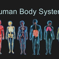 Body Systems Binder