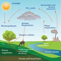 Morgan Potter:Biochemical Cycles