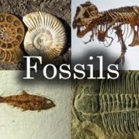 A Fossil Investigation - 8th Grade PBL